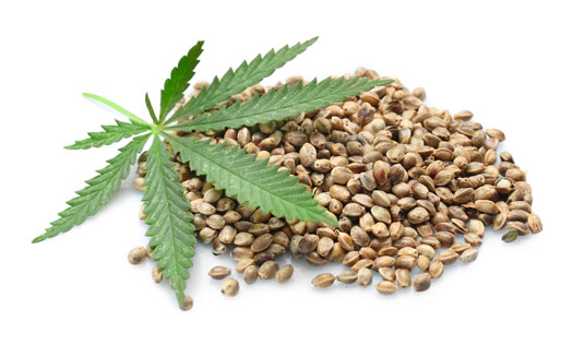 Cannabis seeds online